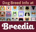 Breedia - The Dog Breed Info Website